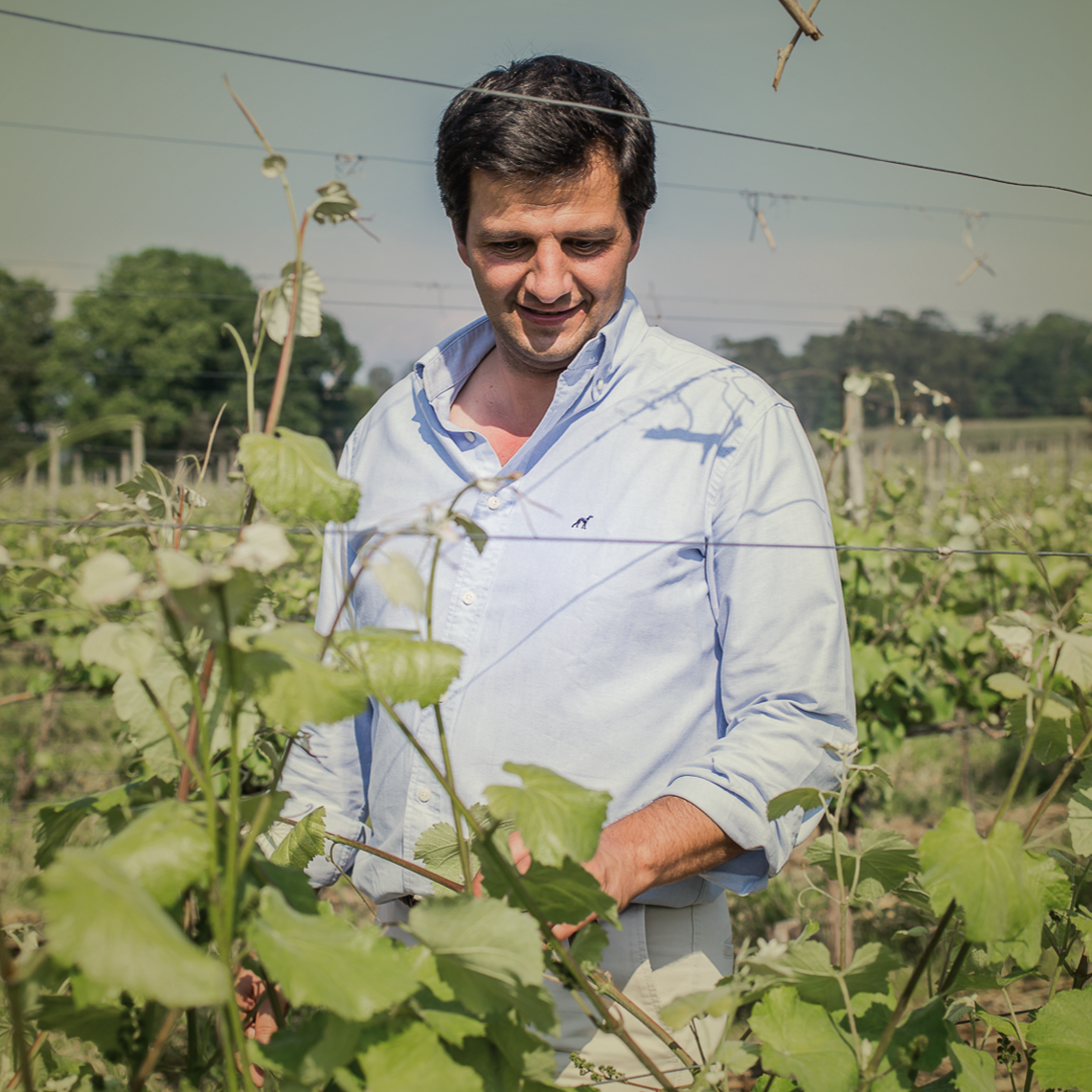 Meet our Director of Viticulture, Pedro Maria Barbosa