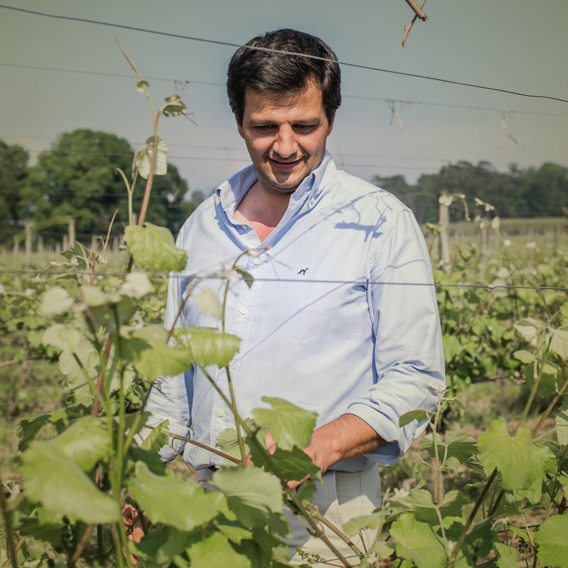 Conheça o nosso Diretor de Viticultura, Pedro Maria Barbosa